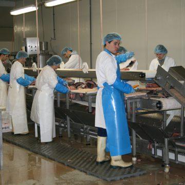 Fishion processing (3)