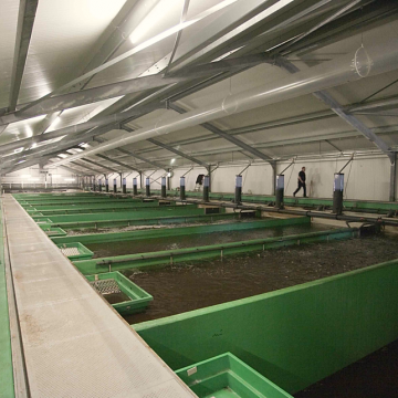 Fishion Claresse fish farm